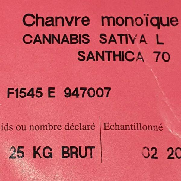 Santhica 70 hemp seeds
