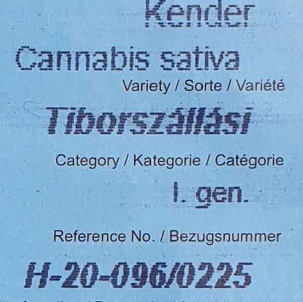 Tiborszallasi hemp seeds